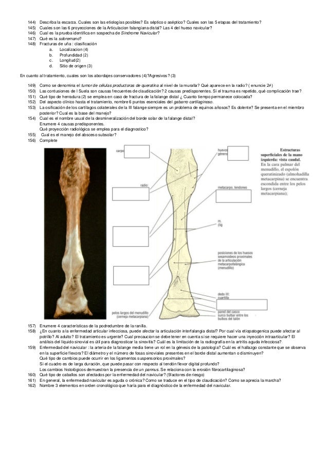Ortopedia veterinaria Preguntero - Equino y canino