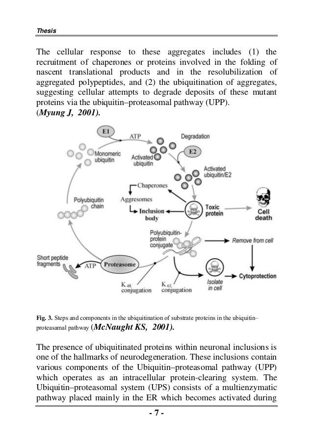 Oxidative stress phd thesis