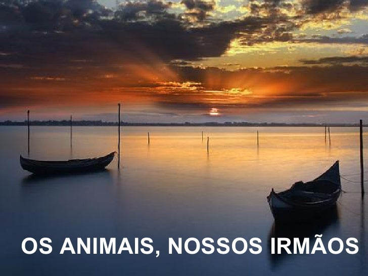 OS ANIMAIS, NOSSOS IRMÃOS