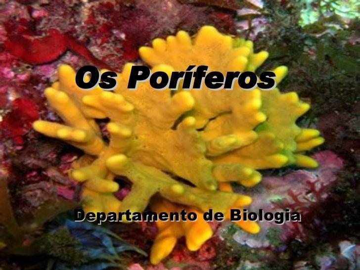 Os Poríferos Departamento de Biologia