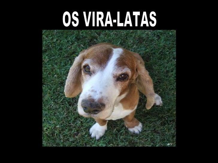 OS VIRA-LATAS