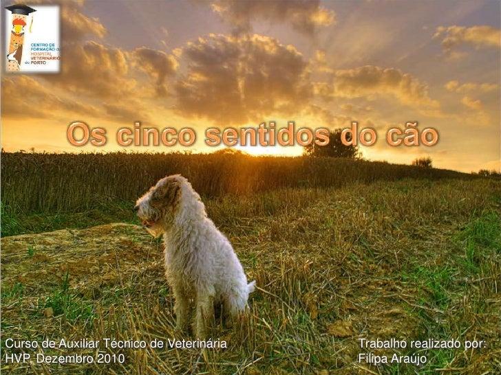 Os cinco sentidos do cão <br />Trabalho realizado por:Filipa Araújo<br />Curso de Auxiliar Técnico de VeterináriaHVP, Deze...