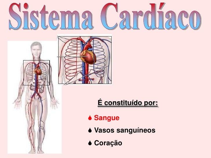 Sistema Cardíaco<br />É constituído por:<br /><ul><li> Sangue