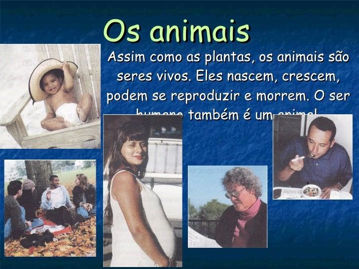Os animais Assim como as plantas, os animais são seres vivos. Eles nascem, crescem, podem se reproduzir e morrem. O ser hu...
