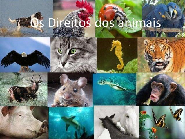Os Direitos dos animais