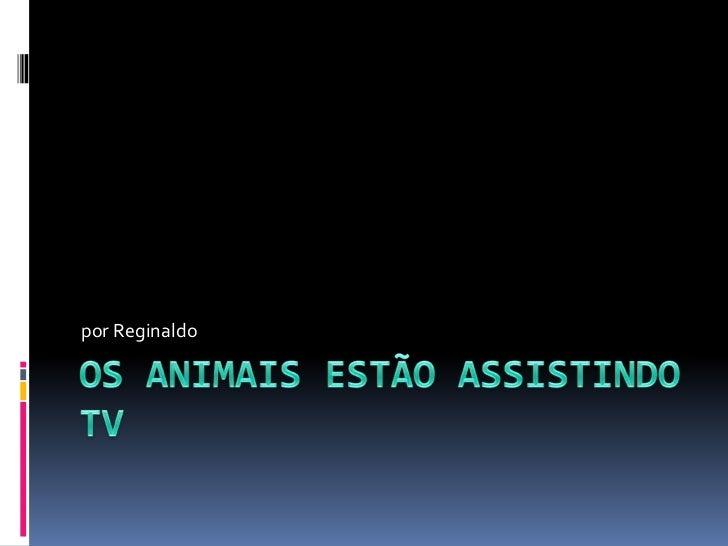 Os animais estão assistindo TV<br />por Reginaldo<br />