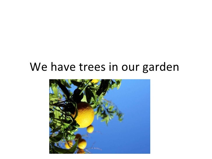 We have trees in our garden
