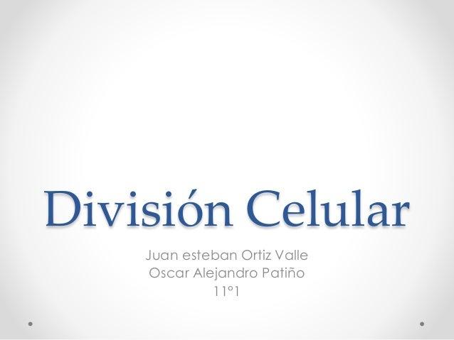 División Celular Juan esteban Ortiz Valle Oscar Alejandro Patiño 11°1