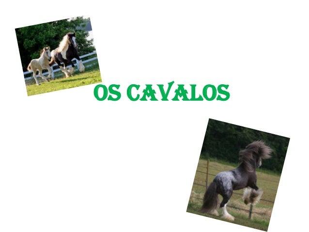 Os cavalos