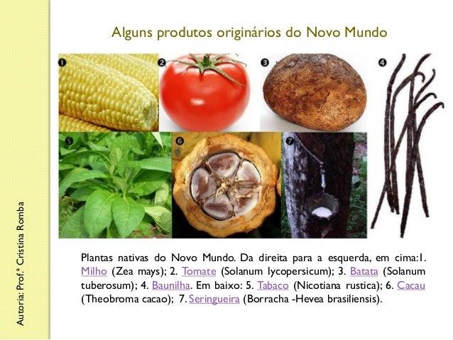 Autoria: Prof.ª Cristina Romba  Alguns produtos originários do Novo Mundo  Plantas nativas do Novo Mundo. Da direita para ...