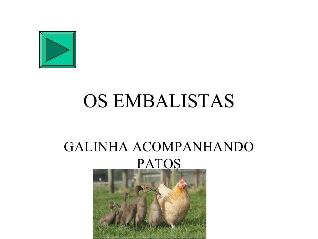 OS EMBALISTASGALINHA ACOMPANHANDO        PATOS