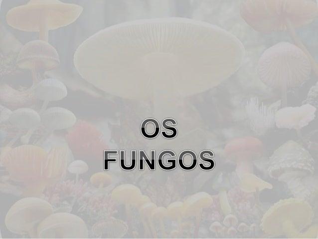 Os fungos e o ambiente • Importantes organismos decompositores; • Podem destruir alimentos estocados, roupas, papéis, cour...