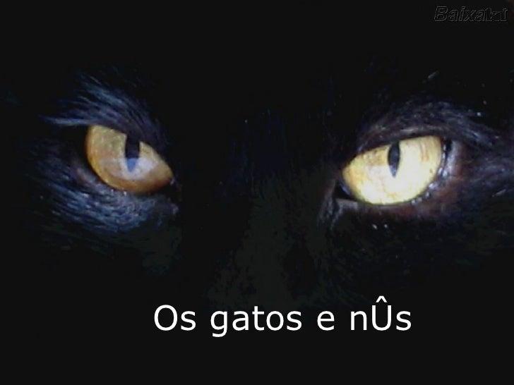 Os gatos e nós