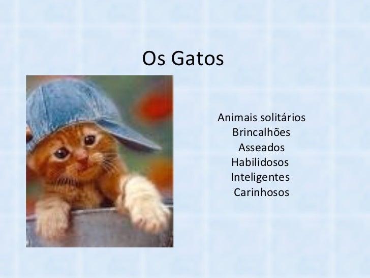 Os Gatos Animais solitários Brincalhões Asseados Habilidosos  Inteligentes  Carinhosos