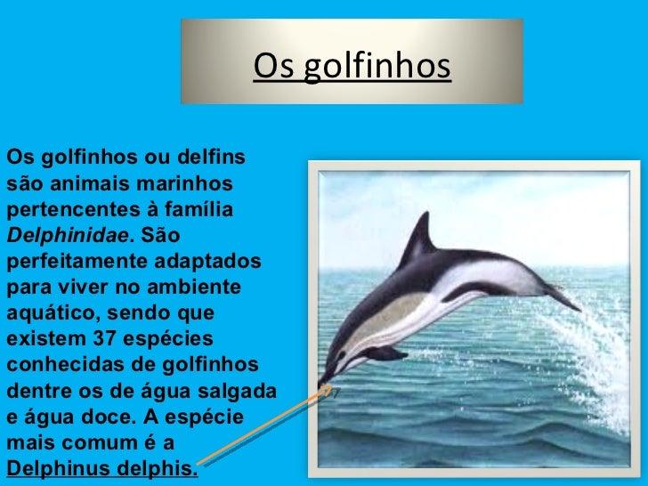Os golfinhos ou delfins são animais marinhos pertencentes à família  Delphinidae . São perfeitamente adaptados para viver ...