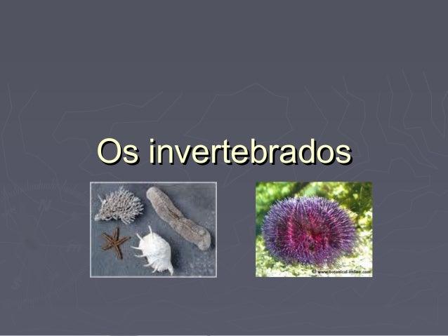 Os invertebradosOs invertebrados