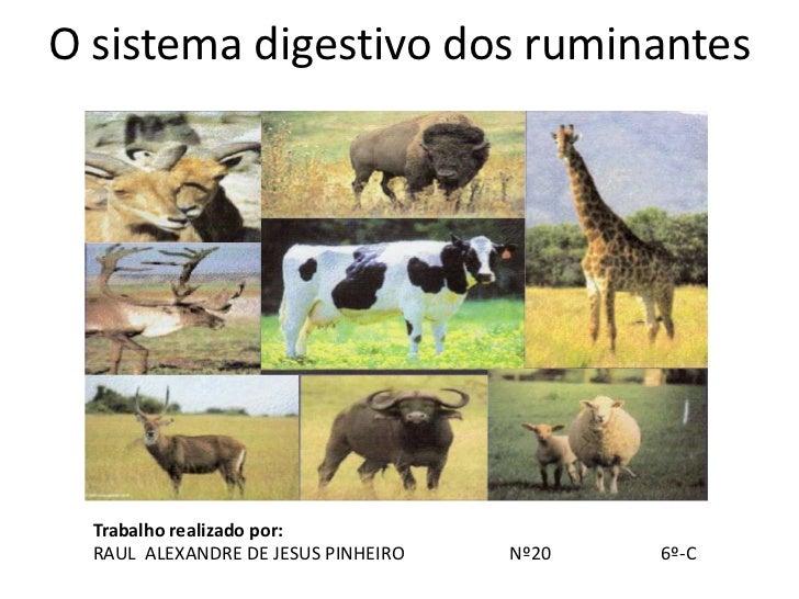 O sistema digestivo dos ruminantes  Trabalho realizado por:  RAUL ALEXANDRE DE JESUS PINHEIRO   Nº20   6º-C