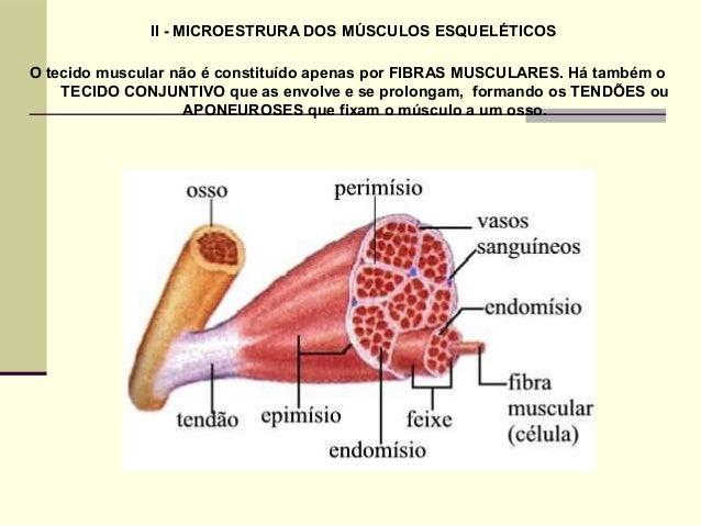 O Sistema Muscular 1