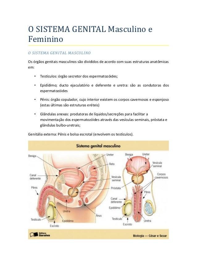 O SISTEMA GENITAL Masculino eFemininoO SISTEMA GENITAL MASCULINOOs órgãos genitais masculinos são divididos de acordo com ...