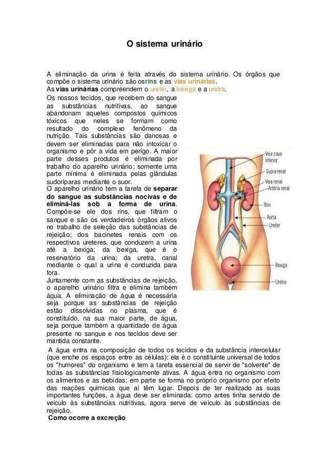 O sistema urinário A eliminação da urina é feita através do sistema urinário. Os órgãos que compõe o sistema urinário são ...