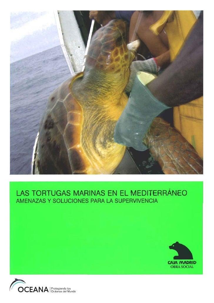 Os Medio Tortugas Oceana