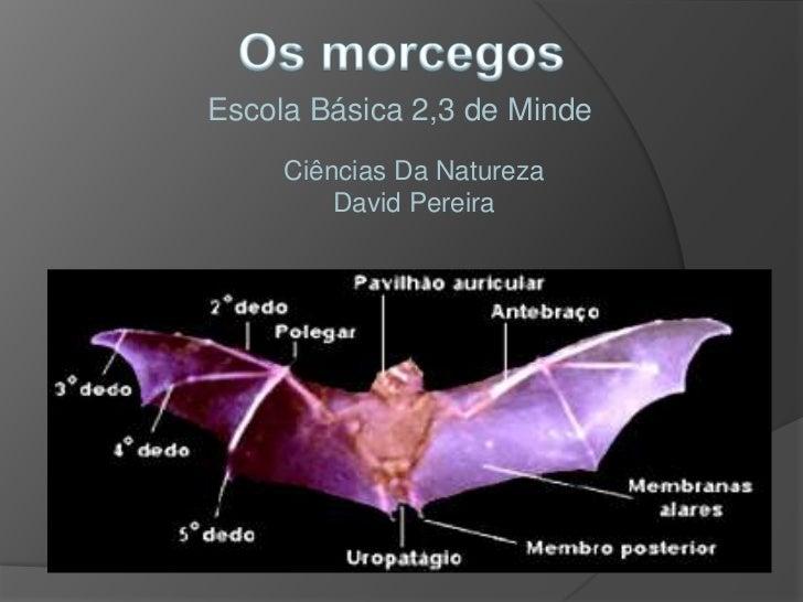 Escola Básica 2,3 de Minde     Ciências Da Natureza         David Pereira