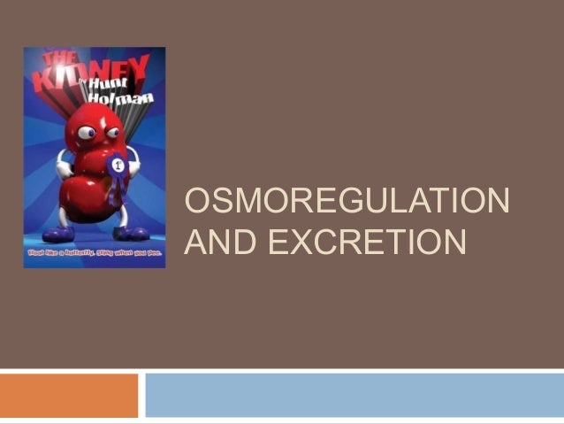 excretion and osmoregulation Osmoregulation and excretion water balance and waste disposal excretory systems water balance osmoconformers-isoosmotic with their environment, most marine.