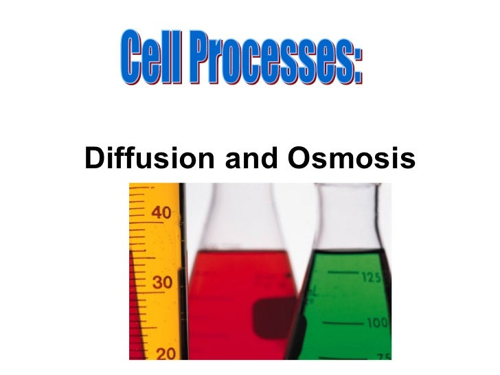 Diffusion and Osmosis Cell Processes: