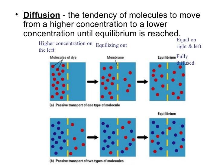 Osmosis/Diffusion/Active Transport