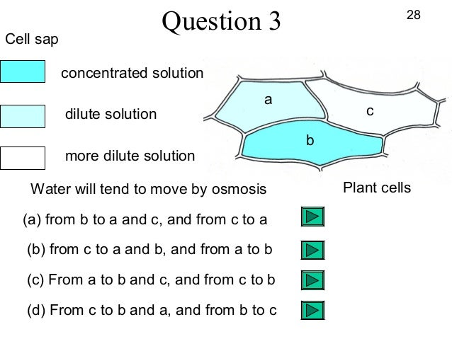 osmosis question Cells, diffusion & osmosis questions (a) this student is examining plant cells this shows the student's labelled diagram of one of the plant cells.