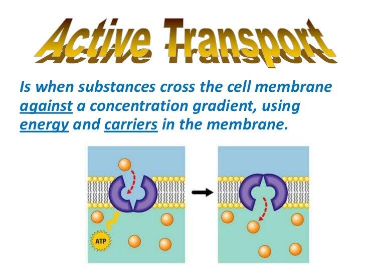 Osmosis, diffusion, active transport