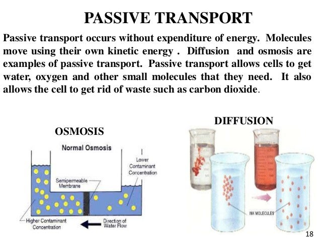 kinetic energy and osmosis