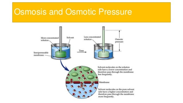 osmosis and osmotic pressure The established equilibrium values of the osmotic pressure are in  osmosis is a  physicochemical process, in which the concentration.
