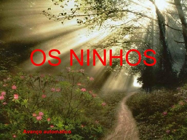 OS NINHOS Avanço automático