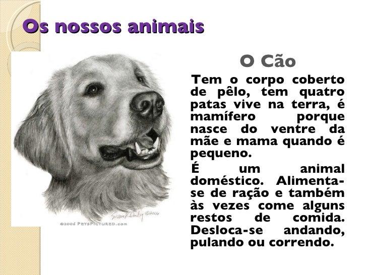 Os nossos animais <ul><li>O Cão </li></ul><ul><li>Tem o corpo coberto de pêlo, tem quatro patas vive na terra, é mamífero ...