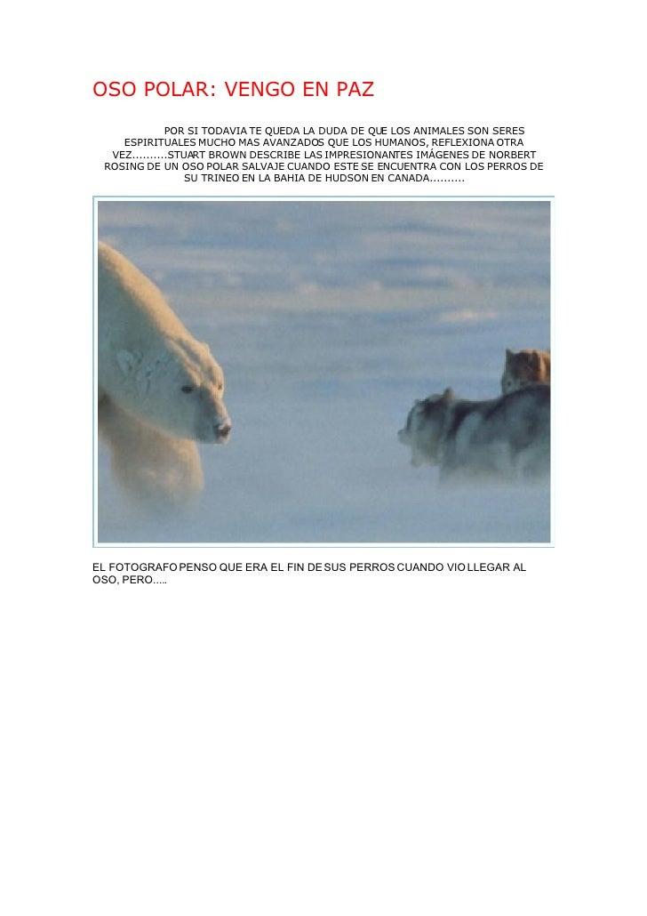 OSO POLAR: VENGO EN PAZ               POR SI TODAVIA TE QUEDA LA DUDA DE QUE LOS ANIMALES SON SERES     ESPIRITUALES MUCHO...