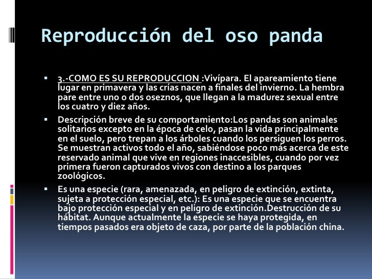 Oso panda - Reproduccion del bambu ...