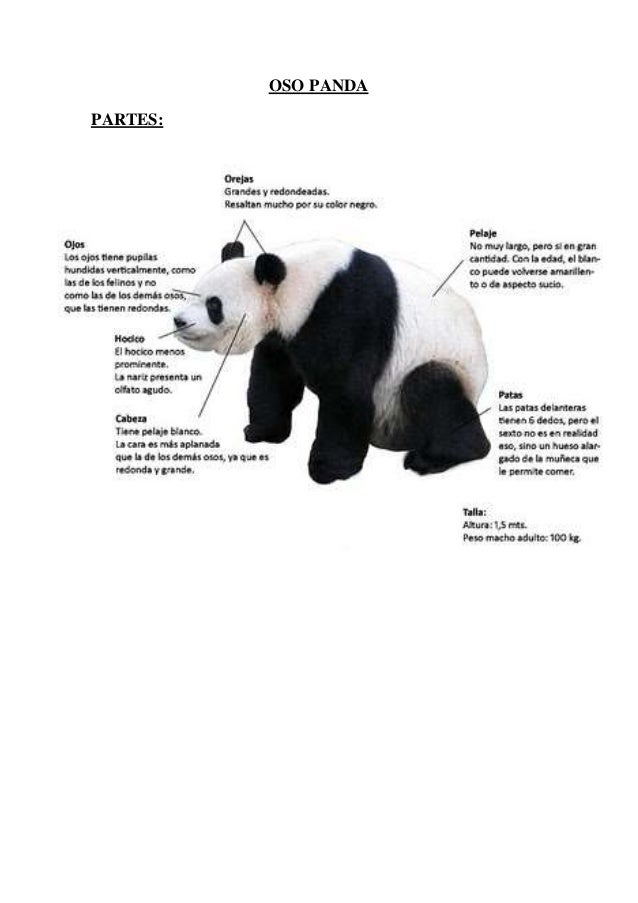 Oso panda for Bedroom y sus partes en ingles
