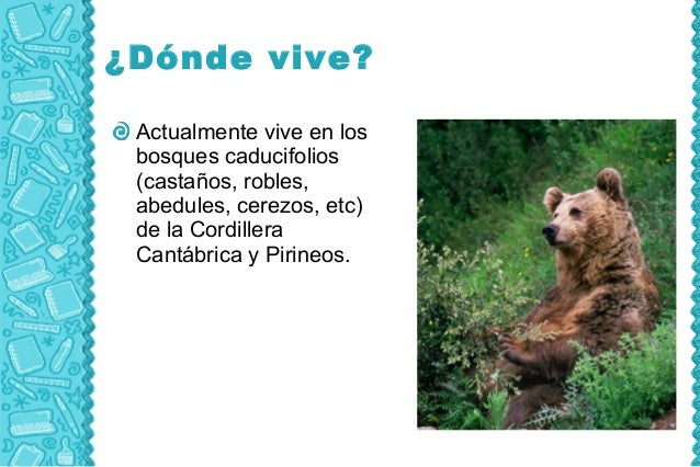 ¿Dónde vive? Actualmente vive en los bosques caducifolios (castaños, robles, abedules, cerezos, etc) de la Cordillera Cant...