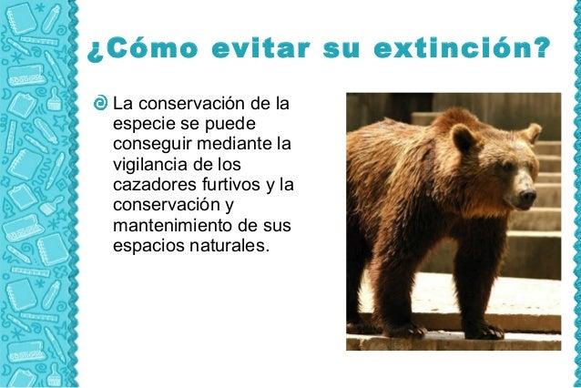 ¿Cómo evitar su extinción? La conservación de la especie se puede conseguir mediante la vigilancia de los cazadores furtiv...
