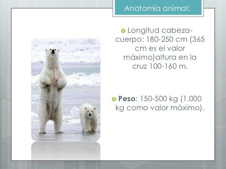 Lujo Anatomía De Un Oso Friso - Anatomía de Las Imágenesdel Cuerpo ...