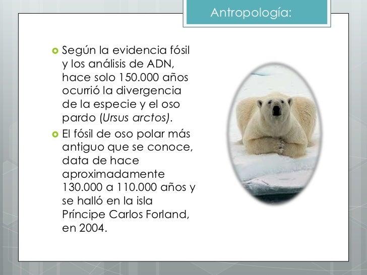 Encantador Anatomía De Un Oso Polar Modelo - Anatomía de Las ...