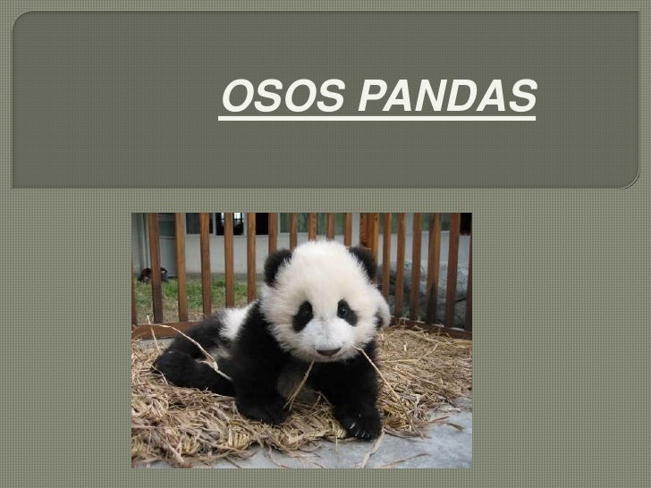 OSOS PANDAS<br />