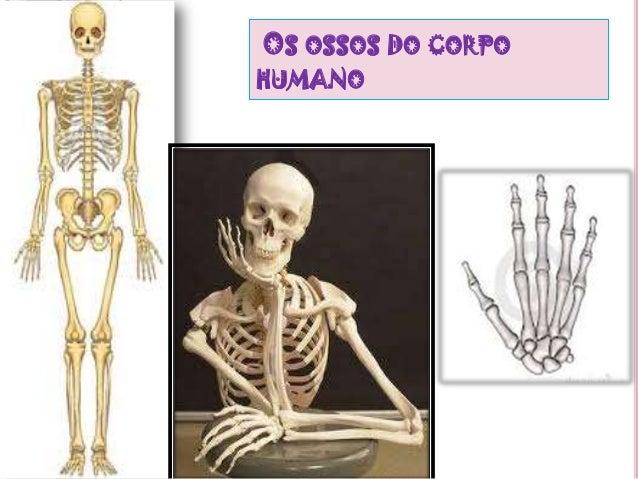 OS OSSOS DO CORPOHUMANO