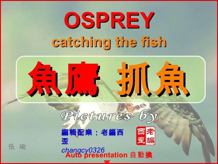 Pictures by 張瑜 魚鷹  抓魚 編輯配樂:老編西歪 changcy0326 OSPREY catching the fish Auto presentation  自動 換頁
