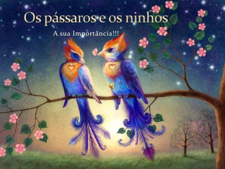 Os pássaros e os ninhos<br />A sua Importância!!!<br />