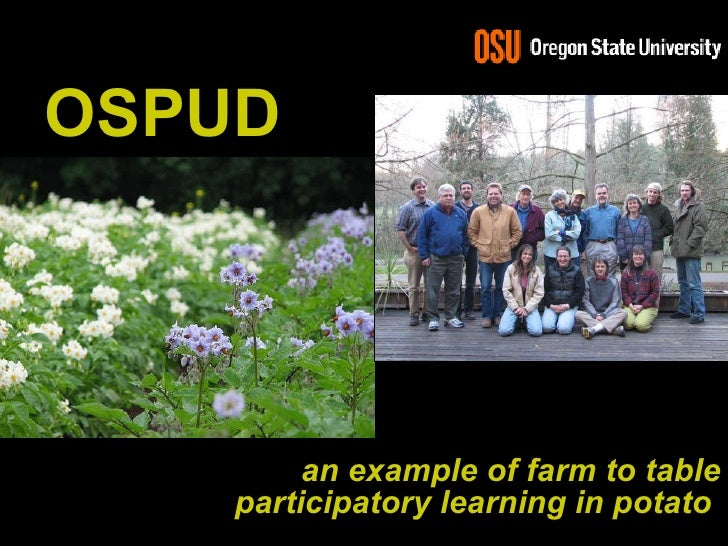 <ul><li>an example of farm to table participatory learning in potato   </li></ul>OSPUD