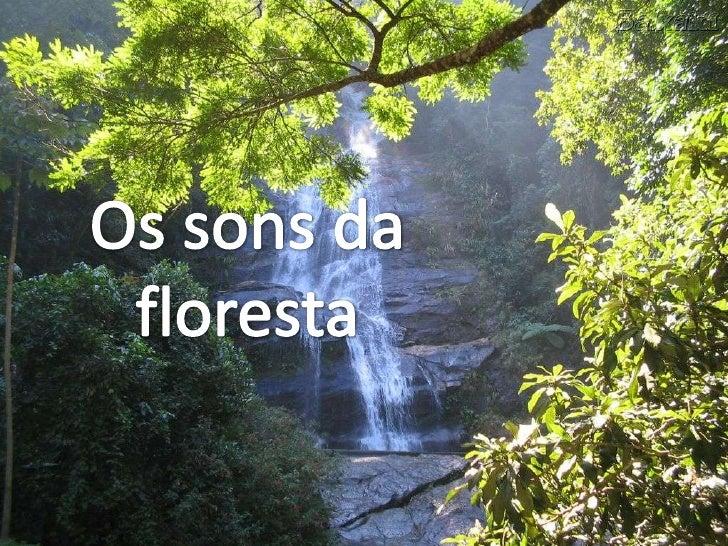Os sons da <br />floresta<br />