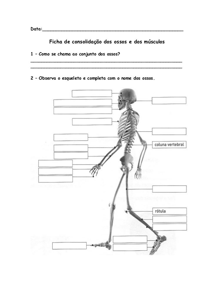 Data:____________________________________________________        Ficha de consolidação dos ossos e dos músculos1 – Como se...