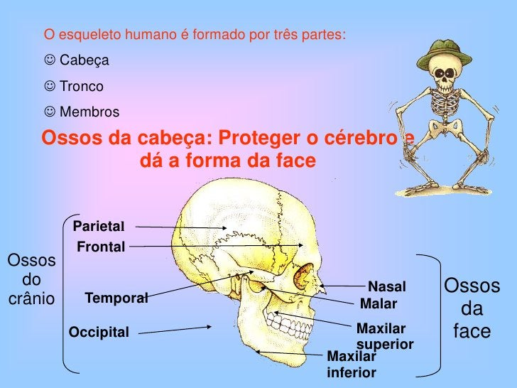 Parietal<br />Ossos      do crânio<br />Frontal<br />Occipital<br />Ossosda face<br />Temporal<br />Nasal<br />Malar<br />...